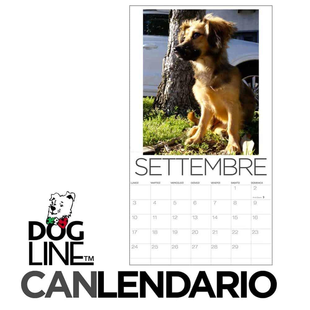 calendario cani 2022 dog line